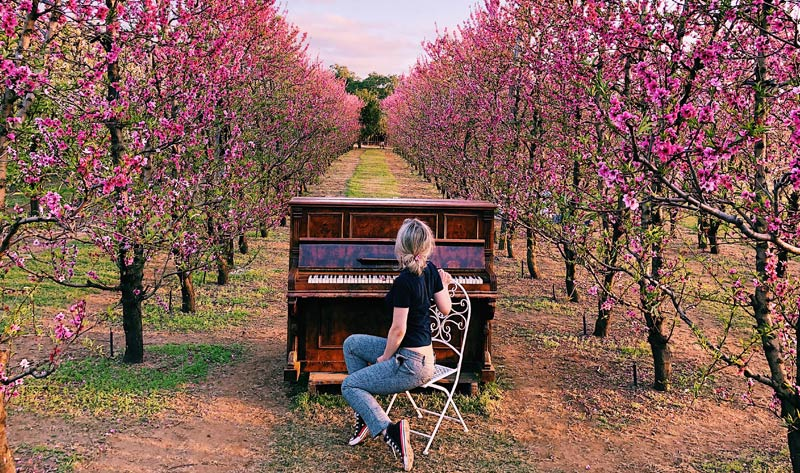 woman sat next to a piano outside in a field of blooming peaches